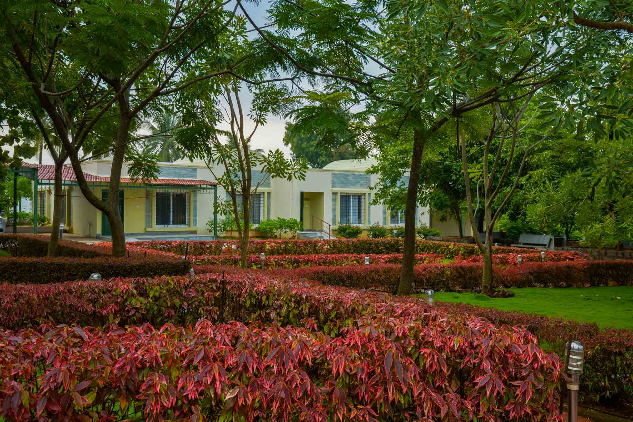 Flower Plants and Trees inside Sharadindu - Sree Senior Homes